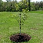 nys planting trees-01-001-01
