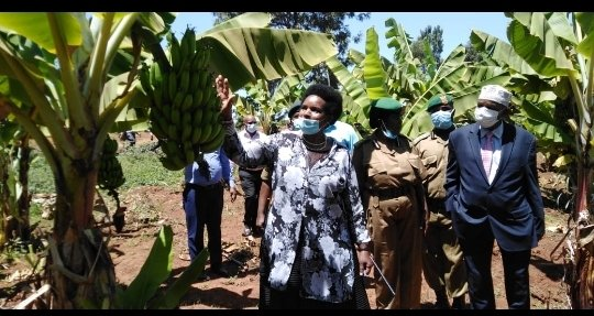 NYS Targets to Boost Food Security in the Country